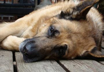 dog-8